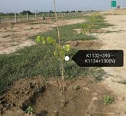 NHA plants 38850 saplings along its Network
