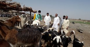 Livestock deptt gives final touch to its anti-tick campaign against Congo virus