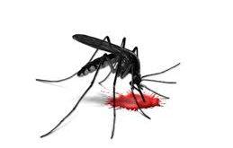 2 more dengue patients die in RWP